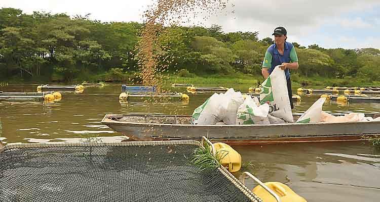 Especialistas brasileiros formam técnicos em aquicultura