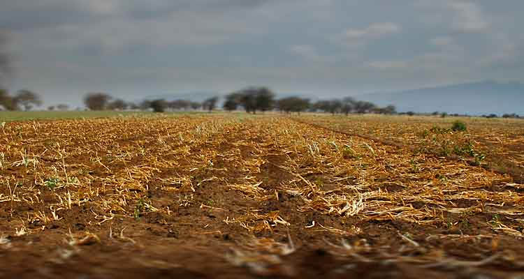 Seca ameaça colheita agrícola na Huíla - Folha 8