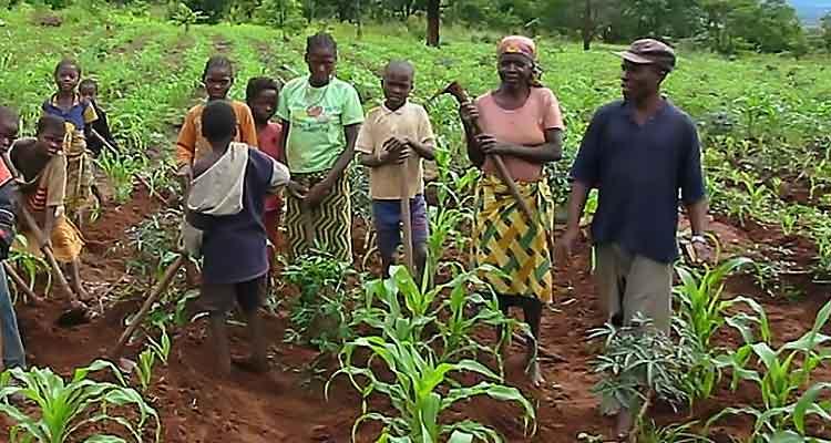 agricultura-itália.angola