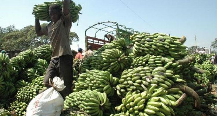 bananas-angola-itália