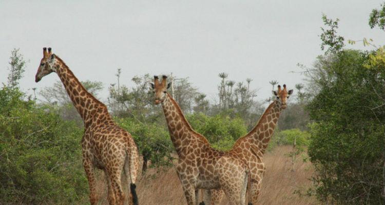 diversidade-biológica-áfrica
