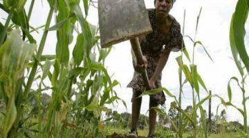 agricultura-angola