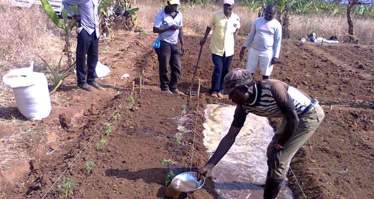 ADRA - apoios semeados, êxitos colhidos