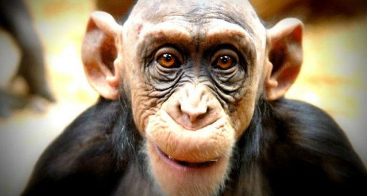 O Macaco Velho da selva de Luanda - Folha 8