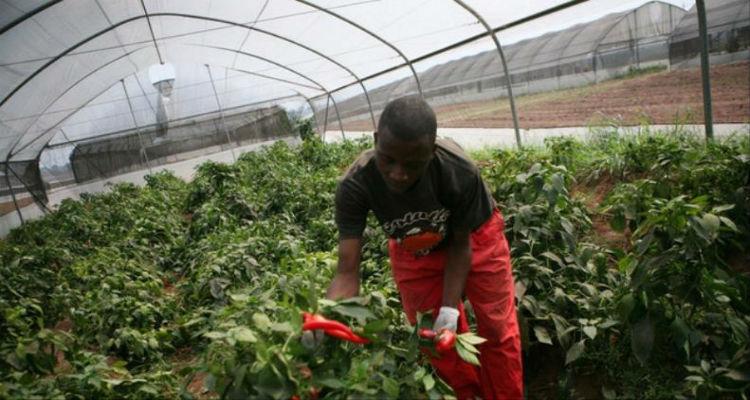 Aposta na produção agrícola - Folha 8